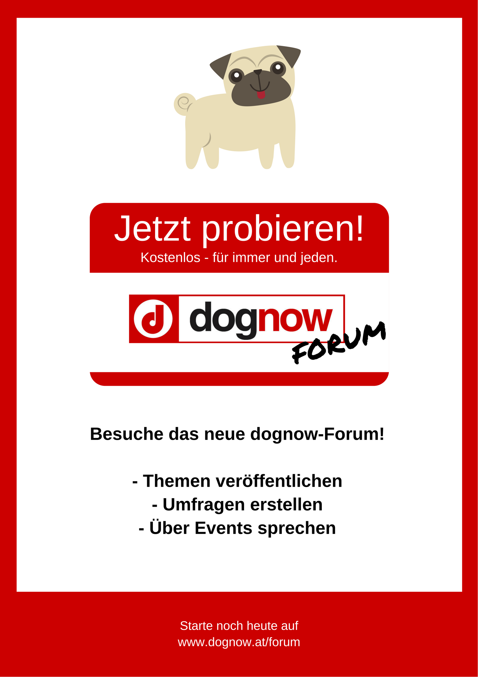 dognow Forum